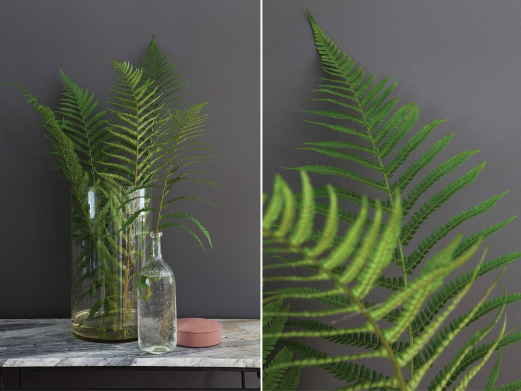 Natur – Planter - Interiør